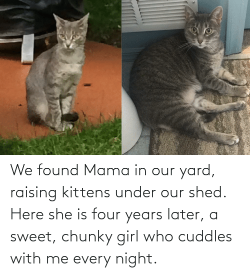 shed: We found Mama in our yard, raising kittens under our shed. Here she is four years later, a sweet, chunky girl who cuddles with me every night.