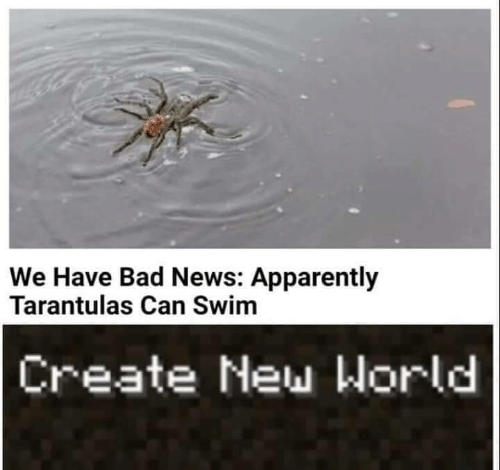 Apparently, Bad, and News: We Have Bad News: Apparently  Tarantulas Can Swim  Create New World