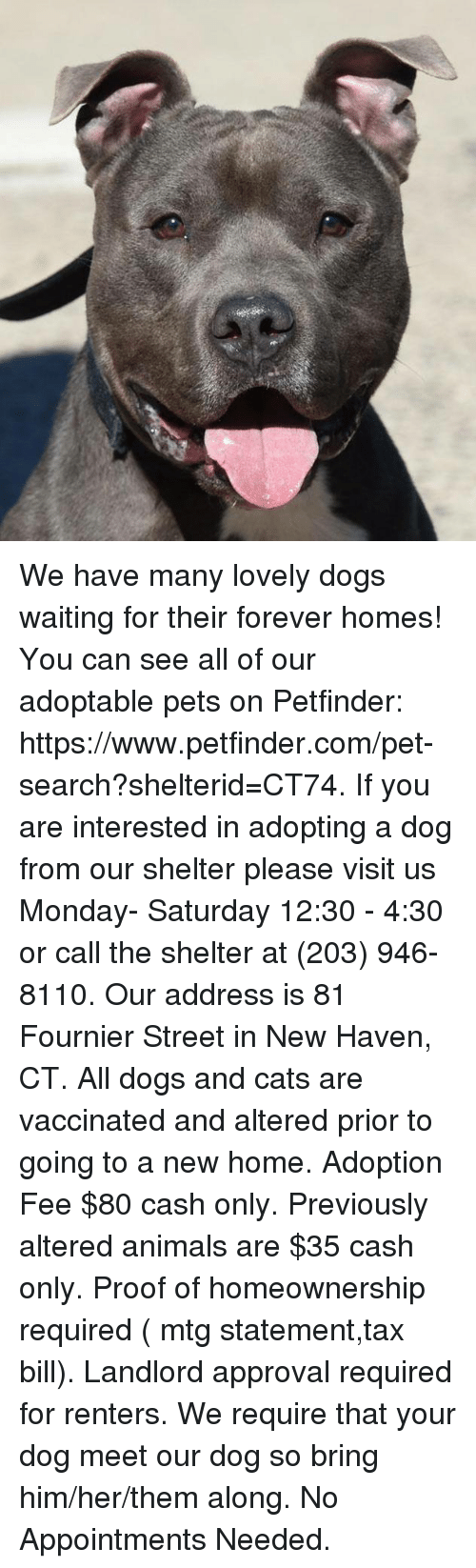 dog-and-cats: We have many lovely dogs waiting for their forever homes! You can see all of our adoptable pets on Petfinder:  https://www.petfinder.com/pet-search?shelterid=CT74.  If you are interested in adopting a dog from our shelter please visit us Monday- Saturday 12:30 - 4:30 or call the shelter at (203) 946-8110.  Our address is 81 Fournier Street in New Haven, CT.  All dogs and cats are vaccinated and altered prior to going to a new home. Adoption Fee $80 cash only. Previously altered animals are $35 cash only. Proof of homeownership required ( mtg statement,tax bill). Landlord approval required for renters. We require that your dog meet our dog so bring him/her/them along. No Appointments Needed.