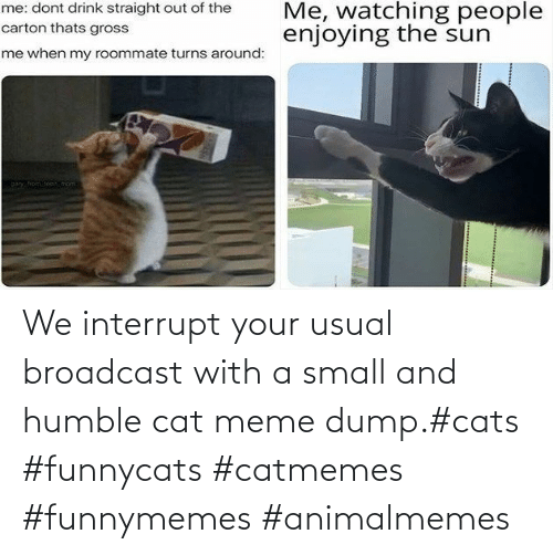 Humble: We interrupt your usual broadcast with a small and humble cat meme dump.#cats #funnycats #catmemes #funnymemes #animalmemes