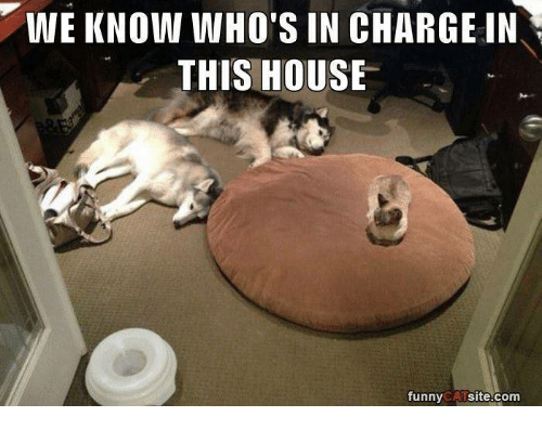 funny cat: WE KNOW WHO'S IN CHARGE IN  THIS HOUSE  funny  CAT  site.com