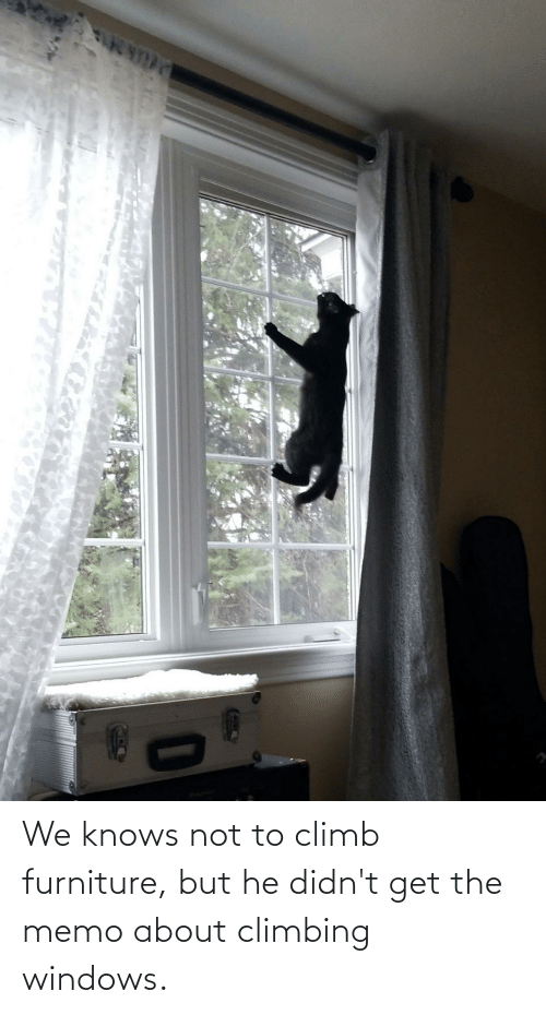 memo: We knows not to climb furniture, but he didn't get the memo about climbing windows.