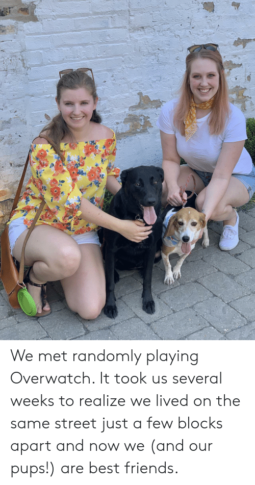 overwatch: We met randomly playing Overwatch. It took us several weeks to realize we lived on the same street just a few blocks apart and now we (and our pups!) are best friends.