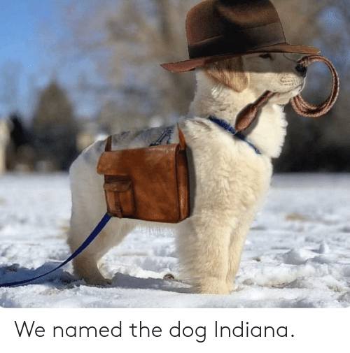 Indiana: We named the dog Indiana.