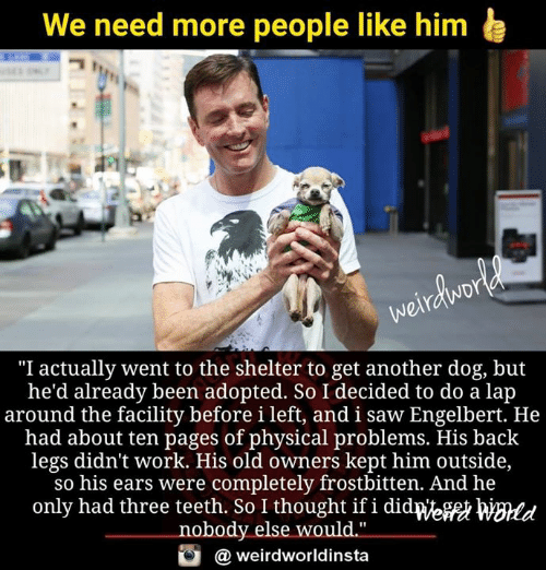 """Memes, Saw, and Work: We need more people like him e  """"I actually went to the shelter to get another dog, but  he'd already been adopted. So I decided to do a lap  around the facility before i left, and i saw Engelbert. He  had about ten pages of physical problems. His back  legs didn't work. His old owners kept him outside,  so his ears were completely frostbitten. And he  only had three teeth. So I thought if i didpeft WBmd  nobody else would.""""  weirdworldinsta"""