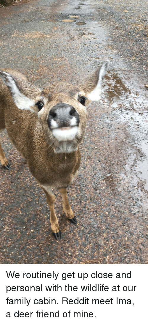 Deer, Family, and Reddit: We routinely get up close and personal with the wildlife at our family cabin. Reddit meet Ima, a deer friend of mine.