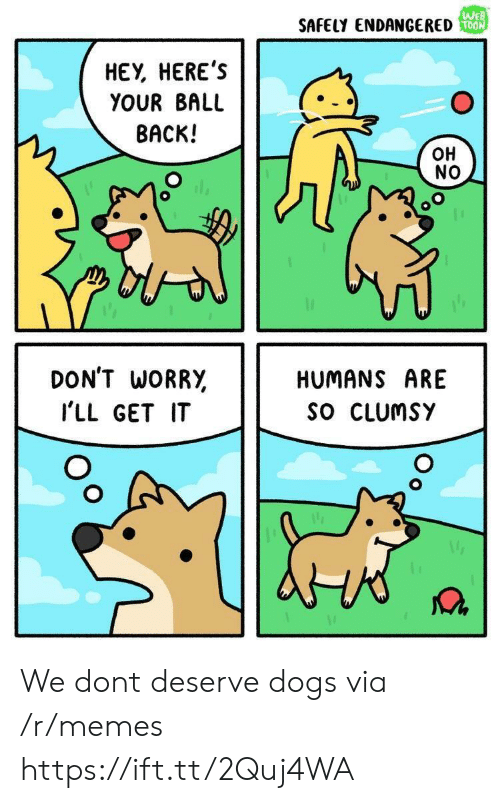 Dogs, Memes, and Back: We  SAFELY ENDANGERED  HEY, HEREs  YOUR BALL  BACK!  OH  NO  DON'T WORR,  I'LL GET IT  HUMANS ARE  SO CLUmsY We dont deserve dogs via /r/memes https://ift.tt/2Quj4WA