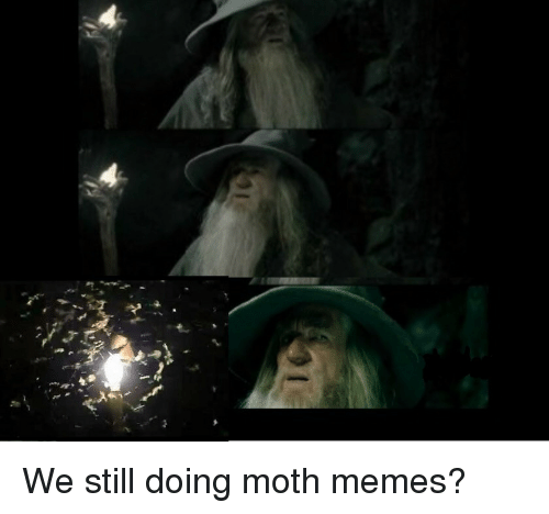 Memes, Moth, and Still: We still doing moth memes?