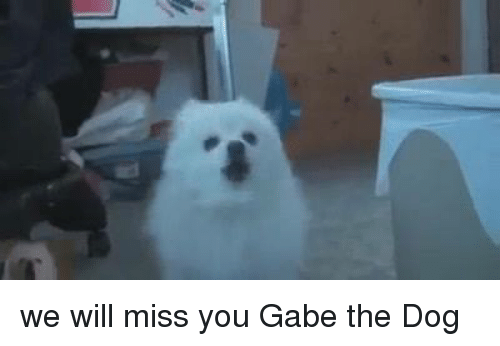 we will miss you: we will miss you Gabe the Dog