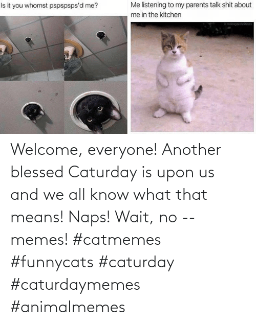 another: Welcome, everyone! Another blessed Caturday is upon us and we all know what that means! Naps! Wait, no -- memes! #catmemes #funnycats #caturday #caturdaymemes #animalmemes
