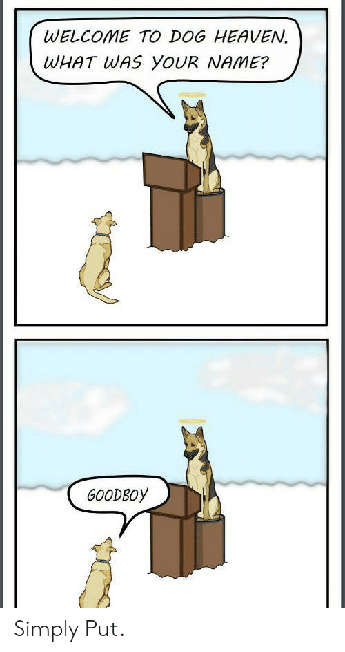 Heaven, Dog, and Name: WELCOME TO DOG HEAVEN.  WHAT WAS YOUR NAME?  GOODBOY Simply Put.
