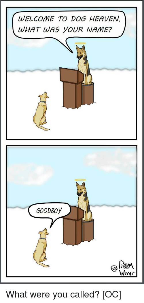 Goodboy: WELCOME TO DOG HEAVEN.  WHAT WAS YOUR NAME?  GOODBOy  W>ve What were you called? [OC]