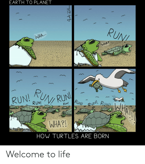 welcome: Welcome to life
