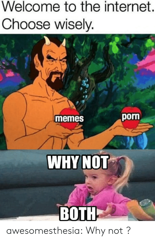 Choose Wisely: Welcome to the internet.  Choose wisely.  porn  memes  WHYNOT  BOTH awesomesthesia:  Why not ?