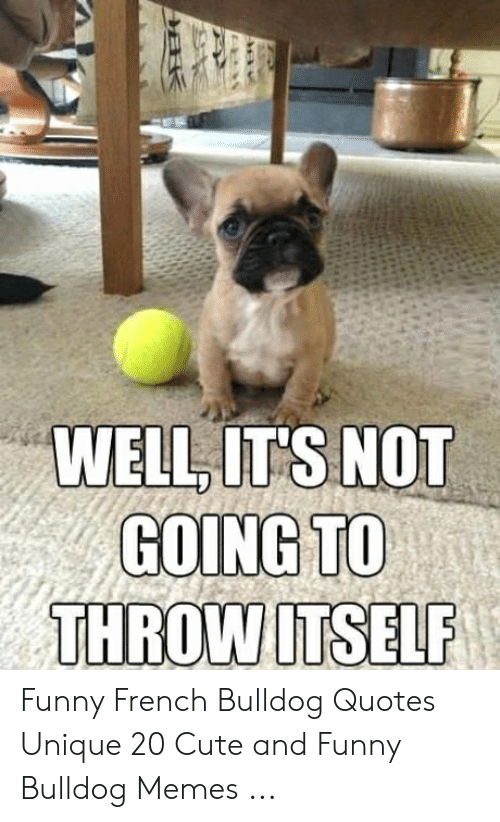 WELLIT\'S NOT GOING TO THROWITSELF Funny French Bulldog ...