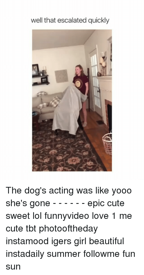 Beautiful, Cute, and Dogs: well that escalated quickly The dog's acting was like yooo she's gone - - - - - - epic cute sweet lol funnyvideo love 1 me cute tbt photooftheday instamood igers girl beautiful instadaily summer followme fun sun