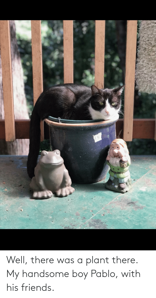pablo: Well, there was a plant there. My handsome boy Pablo, with his friends.