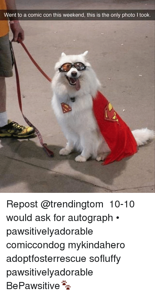 Memes, Comic Con, and 🤖: Went to a comic con this weekend, this is the only photo I took. Repost @trendingtom ・・・ 10-10 would ask for autograph • pawsitivelyadorable comiccondog mykindahero adoptfosterrescue sofluffy pawsitivelyadorable BePawsitive🐾