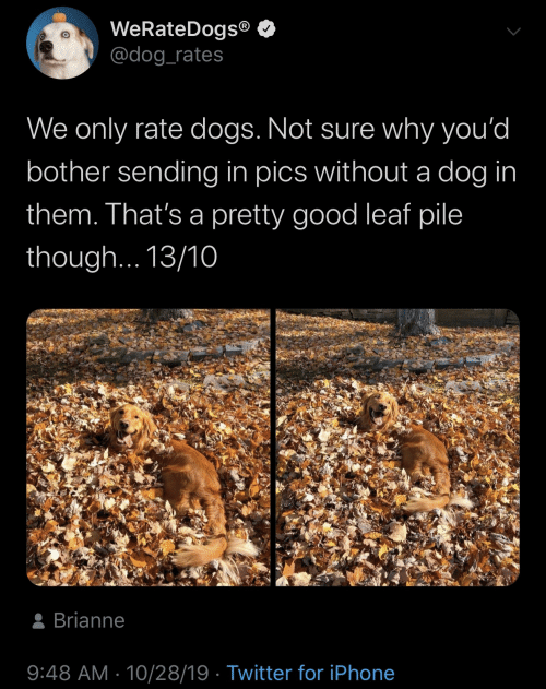 pics: WeRateDogs®  @dog_rates  We only rate dogs. Not sure why you'd  bother sending in pics without a dog in  them. That's a pretty good leaf pile  though... 13/10  8 Brianne  9:48 AM · 10/28/19 · Twitter for iPhone