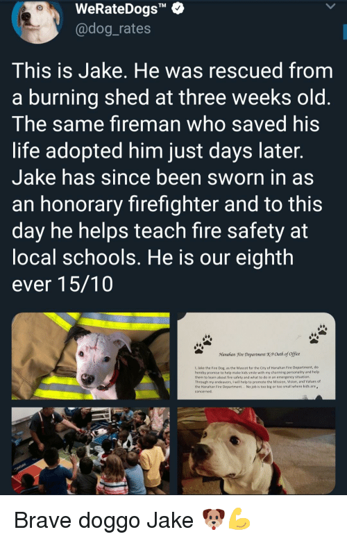 """Fire, Life, and Vision: WeRateDogs""""  @dog_rates  TM  This is Jake. He was rescued from  a burning shed at three weeks old  The same fireman who saved his  life adopted him just days later  Jake has since been sworn in as  an honorary firefighter and to this  day he helps teach fire safety at  ocal schools. He is our eighth  ever 15/10  Manahan Fire Department X9 Oath of office  1, Jake the Fire Dog, as the Mascot for the City of Hanahan Fire Department, do  hereby promise to help make kids smile with my charming personality and help  them to learn about fire safety and what to do in an emergency situation  Through my endeavors, I will help to promote the Mission, Vision, and Values of  the Hanahan Fire Department.. No job is too big or too small where kids are  concerned Brave doggo Jake 🐶💪"""