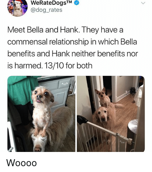 Woooo: WeRateDogsTM  @dog rates  Meet Bella and Hank. They have a  commensal relationship in which Bella  benefits and Hank neither benefits nor  is harmed. 13/10 for both Woooo