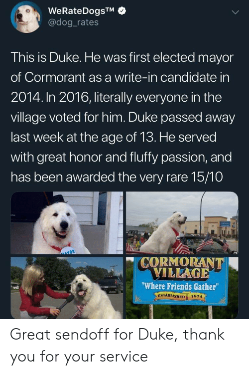 In 2016: WeRateDogsTM  @dog rates  This is Duke. He was first elected mayor  of Cormorant as a write-in candidate in  2014. In 2016, literally everyone in the  village voted for him. Duke passed away  last week at the age of 13. He served  with great honor and fluffy passion, and  has been awarded the very rare 15/10  CORMORANT  VILLAGE  Where Friends Gather  ESTABLISHED 1874  vdl Great sendoff for Duke, thank you for your service