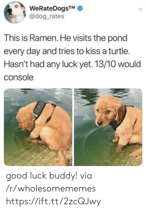 Ramen, Good, and Kiss: WeRateDogsTM  @dog_rates  This is Ramen. He visits the pond  every day and tries to kiss a turtle.  Hasn't had any luck yet. 13/10 would  console good luck buddy! via /r/wholesomememes https://ift.tt/2zcQJwy