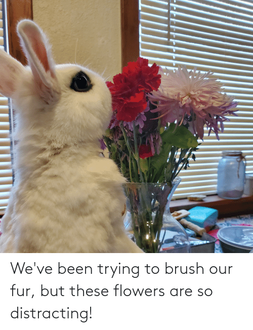 Distracting: We've been trying to brush our fur, but these flowers are so distracting!