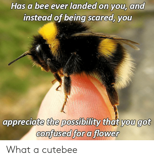 what a: What a cutebee