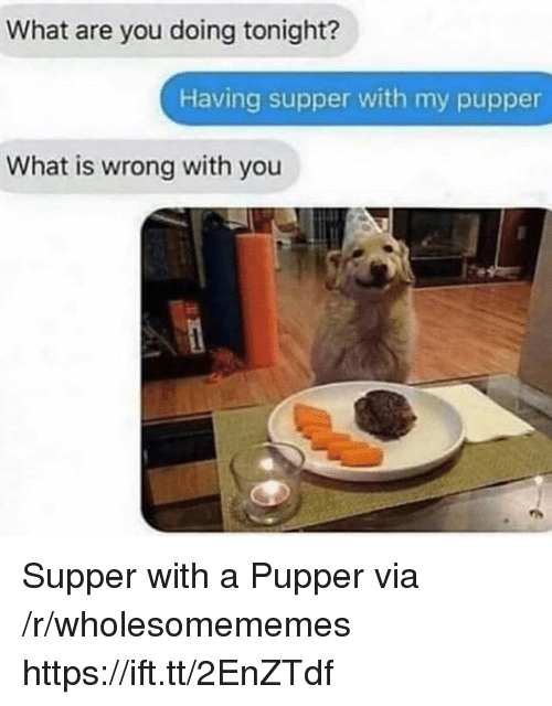 What Is, Via, and You: What are you doing tonight?  Having supper with my pupper  What is wrong with you Supper with a Pupper via /r/wholesomememes https://ift.tt/2EnZTdf
