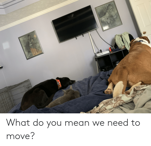 move: What do you mean we need to move?