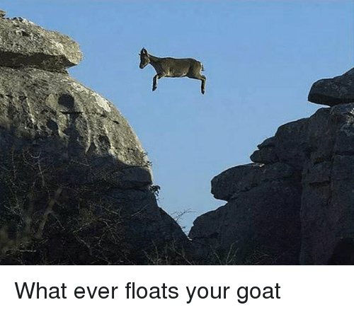 Memes, 🤖, and Goats: What ever floats your goat