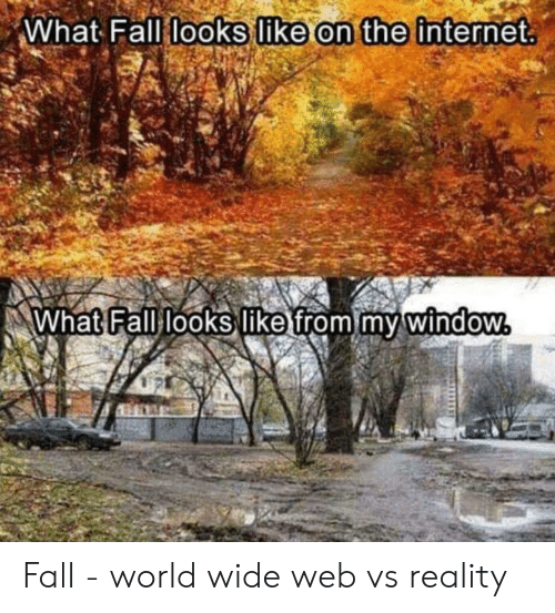 On The Internet: What Fall looks like on the internet  What Fall looks like from my window Fall - world wide web vs reality