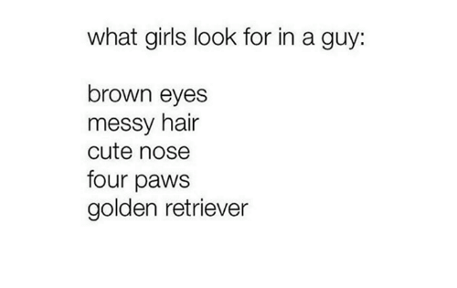 Brown Eye: what girls look for in a guy  brown eyes  messy hair  cute nose  four paws  golden retriever