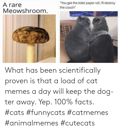 load: What has been scientifically proven is that a load of cat memes a day will keep the dog-ter away. Yep. 100% facts. #cats #funnycats #catmemes #animalmemes #cutecats