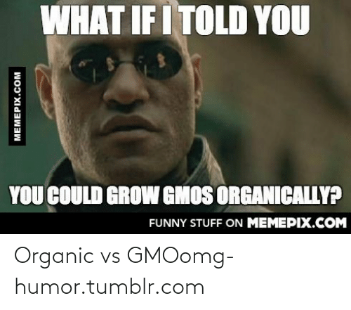 What If I Told: WHAT IF I TOLD YOU  YOU COULD GROW GMOS ORGANICALLY?  FUNNY STUFF ON MEMEPIX.COM  MEMEPIX.COM Organic vs GMOomg-humor.tumblr.com