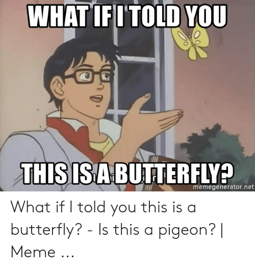 Is This Butterfly Meme Creator