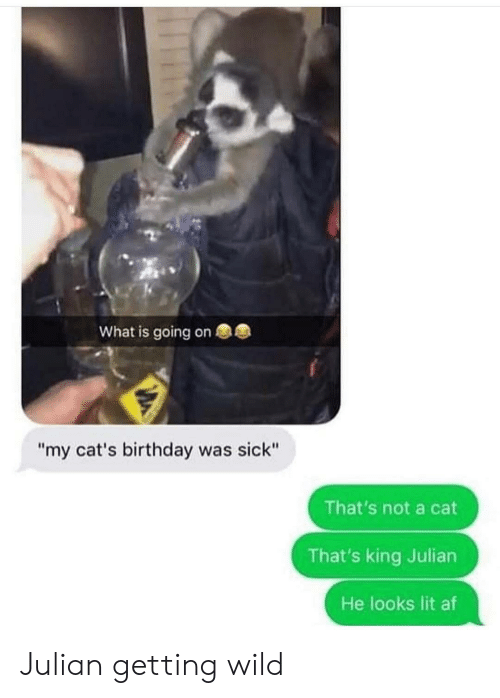 "Af, Birthday, and Cats: What is going on  ""my cat's birthday was sick""  That's not a cat  That's king Julian  He looks lit af Julian getting wild"