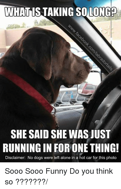 Aloner: WHAT IS TAKING SOLON  SHE SAID SHE WAS JUST  RUNNING IN FOR ONE THING!  Disclaimer: No dogs were left alone in a hot car for this photo Sooo Sooo Funny Do you think so ???????/