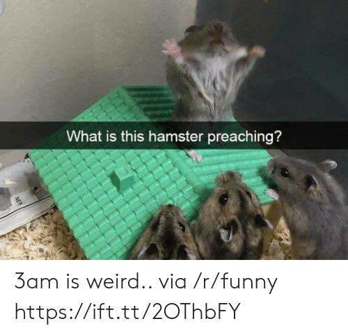Preaching: What is this hamster preaching? 3am is weird.. via /r/funny https://ift.tt/2OThbFY