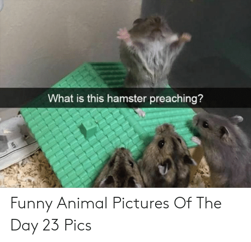Preaching: What is this hamster preaching?  NEW Funny Animal Pictures Of The Day 23 Pics