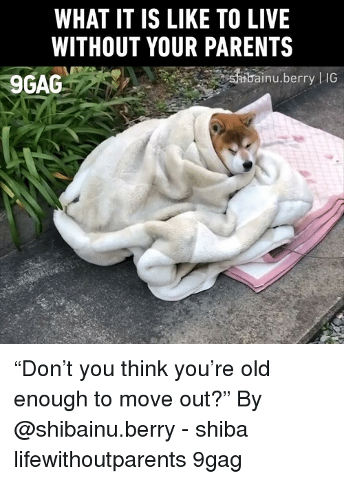 "9gag, Memes, and Parents: WHAT IT IS LIKE TO LIVE  WITHOUT YOUR PARENTS  9GAG  bai  inu.berry |IG ""Don't you think you're old enough to move out?"" By @shibainu.berry - shiba lifewithoutparents 9gag"