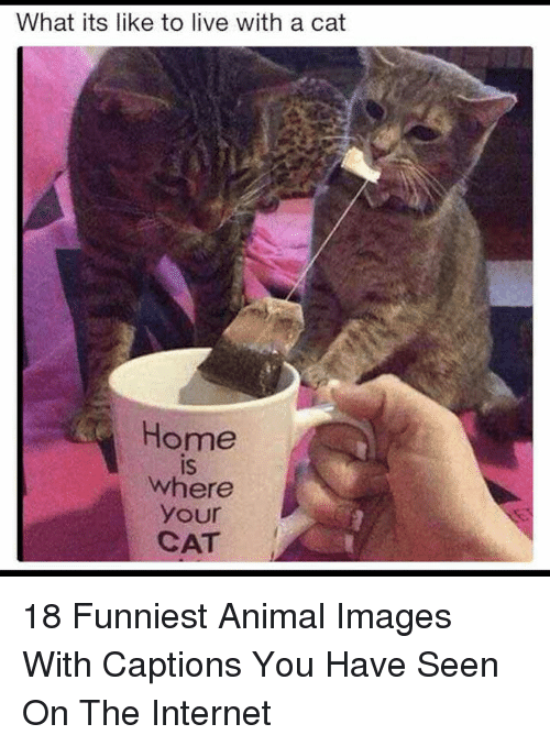 Funniest Animal: What its like to live with a cat  Home  is  IS  where  your  CAT 18 Funniest Animal Images With Captions You Have Seen On The Internet