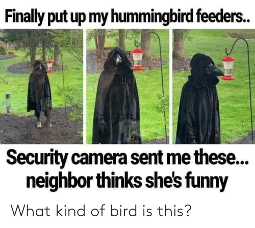 what: What kind of bird is this?