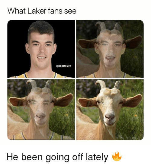 Basketball, Nba, and Sports: What Laker fans see  ONBAMEMES He been going off lately 🔥