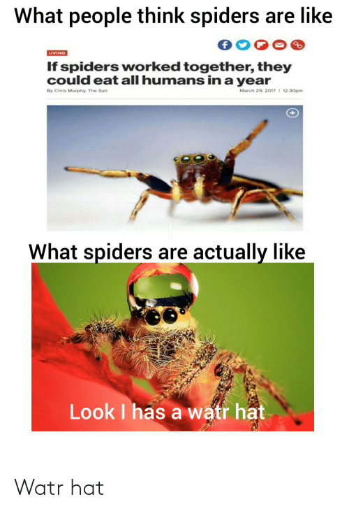 together: What people think spiders are like  LIVING  If spiders worked together, they  could eat all humans in a year  March 29, 2017 I 12:30pm  By Chris Murphy. The Sun  What spiders are actually like  Look I has a watr hat Watr hat