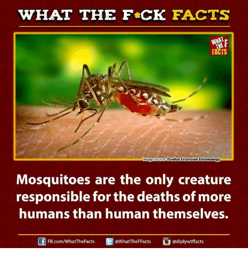 purdue: WHAT THE FCK FACTS  FACTS  Purdue Extension Entomology  mage Source  Mosquitoes are the only creature  responsible for the deaths of more  humans than human themselves.  E WhatTheFFacts  FB.com/WhatThe Facts  adiplywtffacts