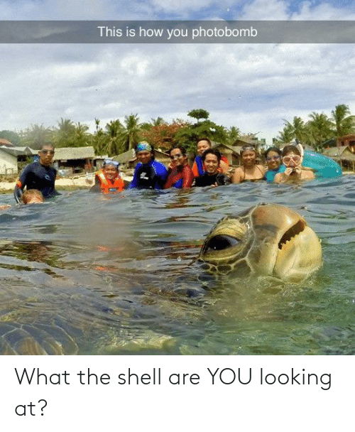 shell: What the shell are YOU looking at?