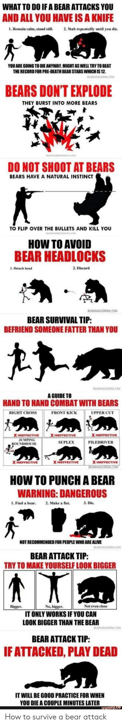 Guide To: WHAT TO DO IF A BEAR ATTACKS YOU  AND ALL YOU HAVE IS A KNIFE  1. Remain calm, stand still.2. Stab repeatedly until you die  YOU ARE GOING TO DIE ANYWAY.MIGHTASWELL TRY TO BEAT  THE RECORD FOR PRE-DEATH BEAR STABS WHICH IS 12.  BEARS DONT EXPLODE  THEY BURST INTO MORE BEARS  DO NOT SHOOT AT BEARS  BEARS HAVE A NATURAL INSTINCT  TO FLIP OVER THE BULLETS AND KILL YOU  HOW TO AVOID  BEAR HEADLOCKS  1. Detach head  2. Discard  TP  BEARMAGEDDON COM  BEAR SURVIVAL TIP  BEFRIEND SOMEONE FATTER THAN YOU  A GUIDE TO  HAND TO HAND COMBAT WITH BEARS  RIGHT CROSS  FRONT KICK  UPPER CUT  INEFFECTIVE  JUMPING  SUPLEX  PILEDRIVER  ROUNDHOUSE  X INEFFECTIVE  X INEFFECTIVE  ON  HOW TO PUNCH A BEAR  WARNING: DANGEROUS  l. Find a bear 2. Make a fist.  3. Die.  NOT RECOMMENDED FOR PEOPLE WHO ARE ALIVE  BEAR ATTACK TIP:  TRY TO MAKE YOURSELF LOOK BIGGER  Bigger  No, bigger  Not even close  IT ONLY WORKS IF YOU CAN  LOOK BIGGER THAN THE BEAR  BEAR ATTACK TIP:  F ATTACKED, PLAY DEAD  IT WILL BE GOOD PRACTICE FOR WHEN  YOU DIE A COUPLE MINUTES LATER How to survive a bear attack