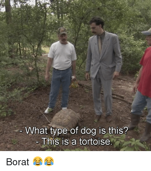 Memes, Borat, and 🤖: What type of dog is this?  This is a tortoise Borat 😂😂